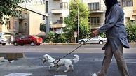 سگگردانی در مراکز عمومی لواسان ممنوع است