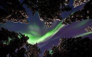 عکس منتخب نشنال جئوگرافیک   شفق شمالی در جنگل های سوئد