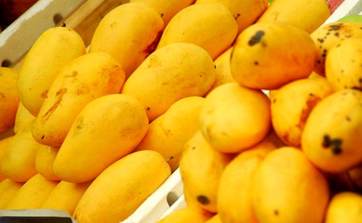 قیمت میوه های گرمسیری شکسته شد