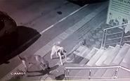 حملهی یک گربه به ۵ سگ غول پیکر! + فیلم