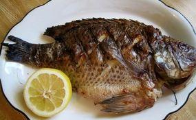 ماهی پرطرفدار تیلاپیا چه بلایی بر سر شما میآورد؟+ فیلم