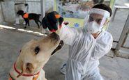 علم در خصوص تشخیص بوی کروناویروس توسط سگ ها چه میگوید؟