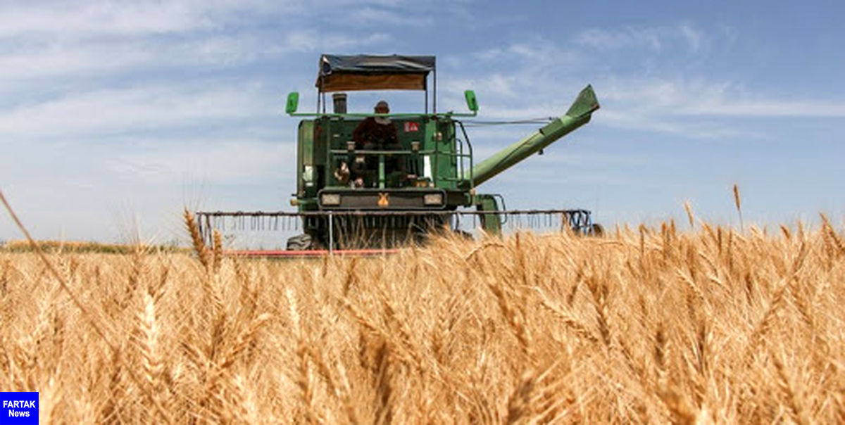 افزایش ظرفیت 400 هزار تنی ذخیره سازی گندم در استان کرمانشاه طی 7 سال گذشته