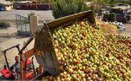 دپوی سیب درختی در کنارجادههای مهاباد + فیلم
