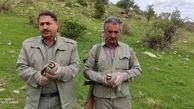 رهاسازی 3 قطعه کبک در زیستگاه های طبیعی شهرستان سرپل ذهاب
