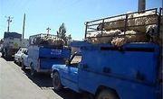 روند قاچاق دام در کردستان کاهش یافت