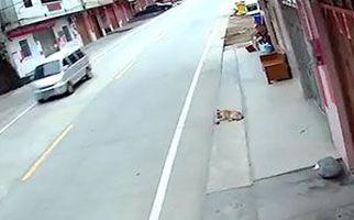 گرفتن سگ ولگرد در ۲ ثانیه! + فیلم