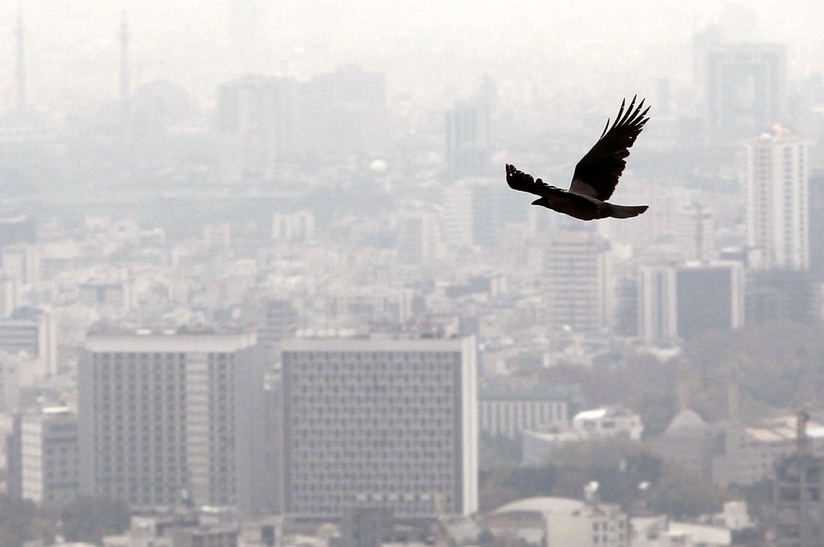 طب سنتی برای مقابله با آلودگی هوا چه راهکاری می دهد؟