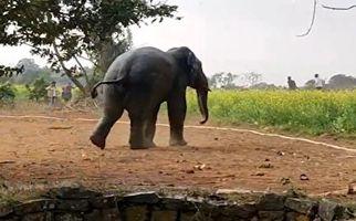 نجات جالب یک فیل از چاه با استفاده از آب + فیلم