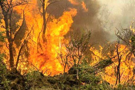 جنگلهای آمل در آتش و دود