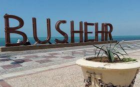 پرش زیبای نهنگ در ساحل بوشهر + فیلم
