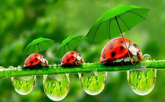 کارآفرینی با استفاده از حشرات