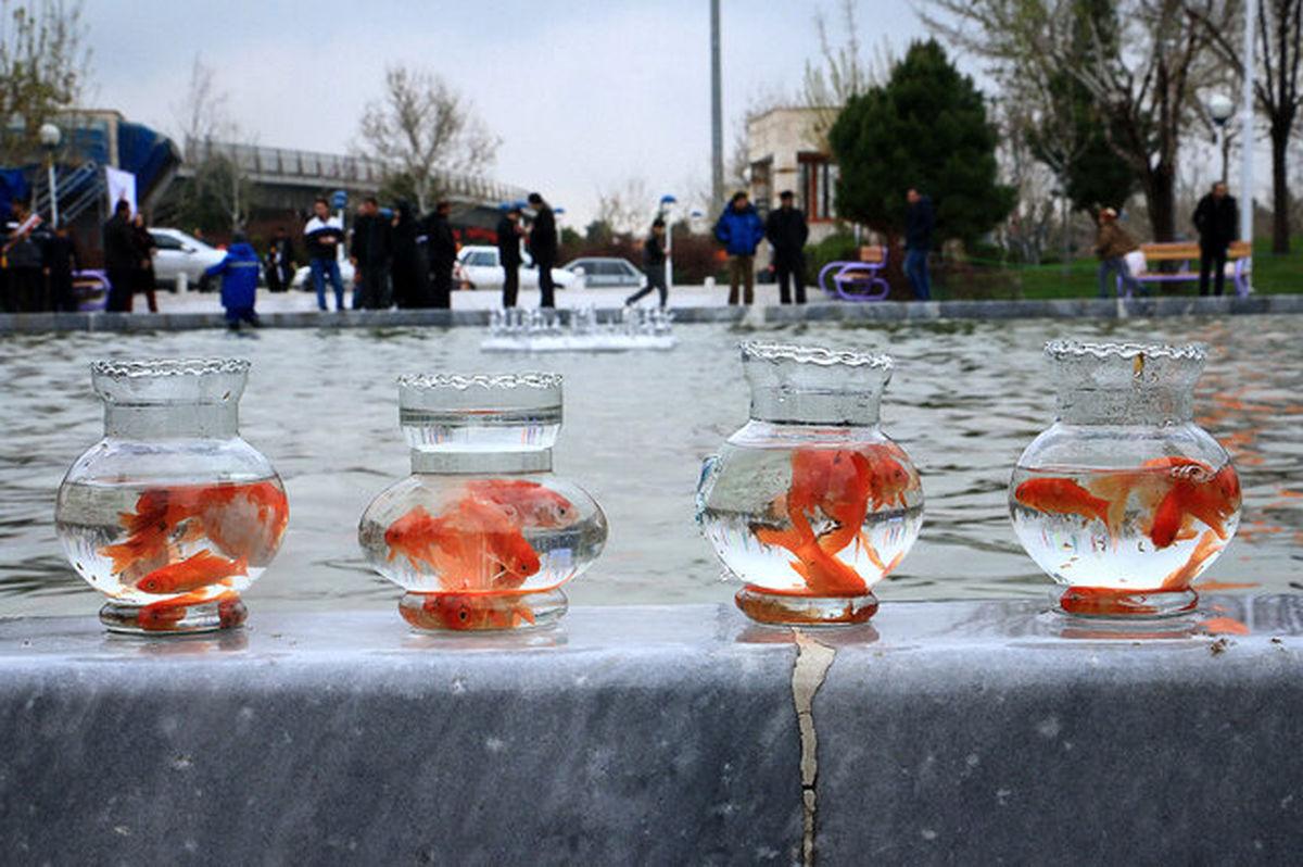 هشدار در خصوص آزادسازی ماهی قرمز در آب های آزاد