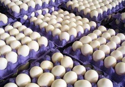 صادرات 13 هزار تن تخم مرغ