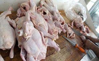 نکاتی ساده اما کاربردی در خرید مرغ/ آیا ارزش غذایی مرغ های درشت بیشتر است؟+فیلم