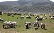 در آیندهای نزدیک عشایر منطقه مغان ساماندهی میشوند