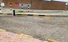 فیلم/ هجوم ملخ ها به پاسگاه مهران در استان ایلام