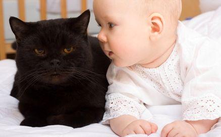 مزایا و معایب نگهداری  گربه در خانه