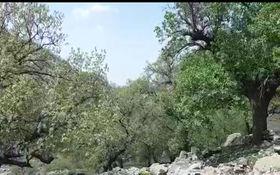 طبیعت بینظیر و دیدنی در روستای بیدرود + فیلم