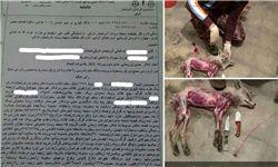 عاملین کشتار بیرحمانه 3 گرگ و 7 روباه در شبستر محکوم شدند