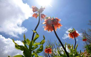 گلهای رنگارنگ  و لالههای واژگون زیبا گهواره به روایت تصویر