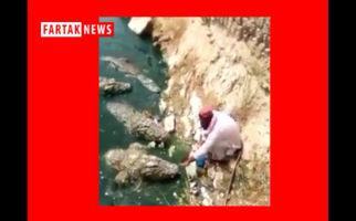 فیلم/ کار خطرناک مرد در غذا دادن به تمساح ها