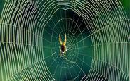 پوشیده شدن درختان زیر تار عنکبوت + فیلم