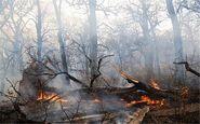 وقوع آتشسوزی در جنگلهای اندیکا