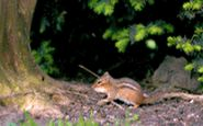 فیلمی صحنه آهسته از حرکت شگفت انگیز حیوانات