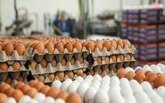 افزایش قیمت تخم مرغ به ۵ دلیل