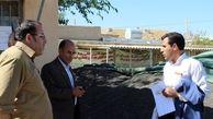 خرید 475 تن دانه روغنی آفتابگردان  در  کرمانشاه