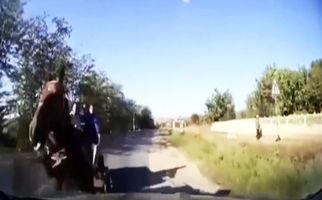 تصادف خودرو با اسب رم کرده در خیابان + فیلم