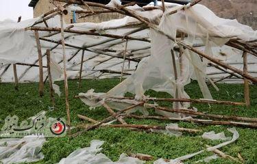 گزارش تصویری از آسیب به مزارع اصفهان بخش فلاورجان در اثر تندباد