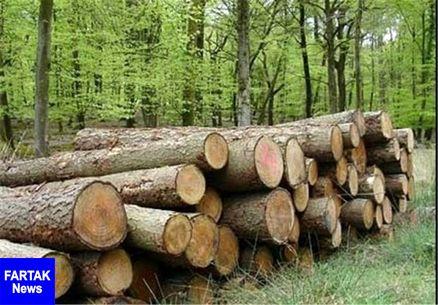 کاهش ۵ درصدی قاچاق چوب در کشور