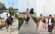 گاوسواری دختران چینی خبرساز شد!