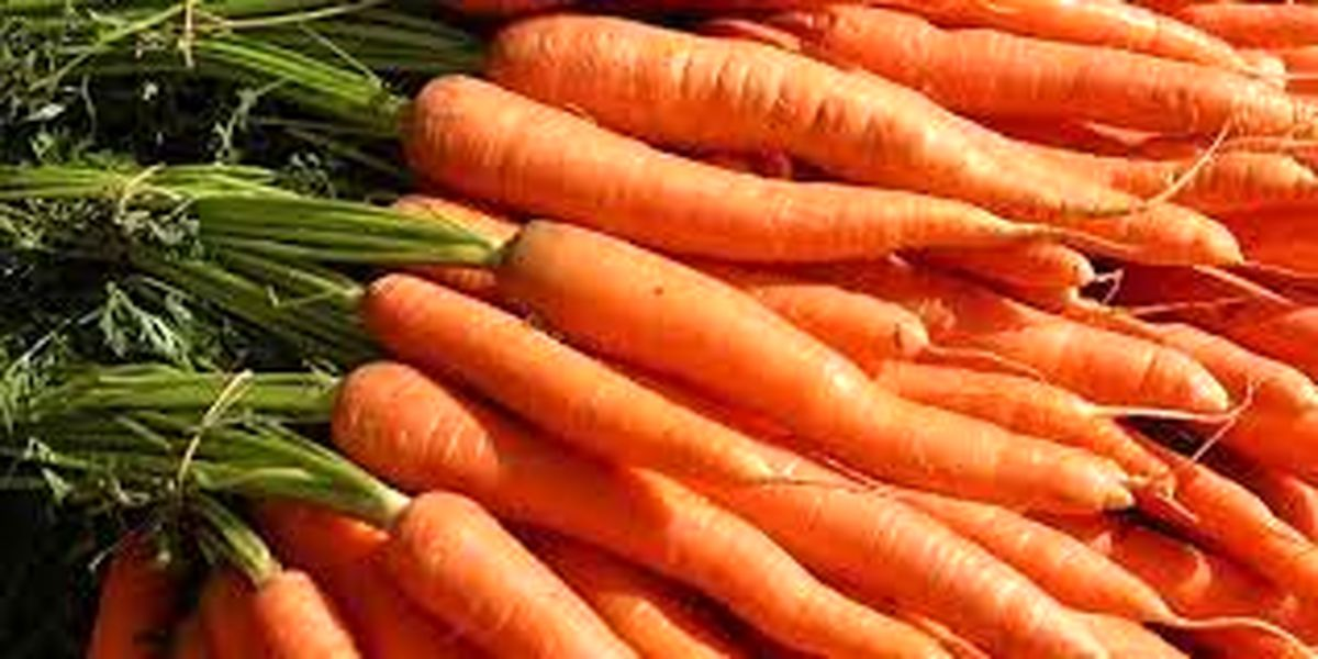 ریزش قیمت هویج در بازار + جزییات