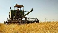  خرید تضمینی بیش از 500 تن گندم مازاد بر نیاز کشاورزان مناطق گرمسیری استان کرمانشاه