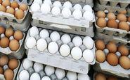 کاهش چشمگیر قیمت تخم مرغ