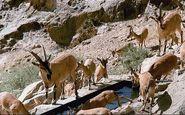 ورود به منطقه حفاظت شده باشگل تاکستان ممنوع است
