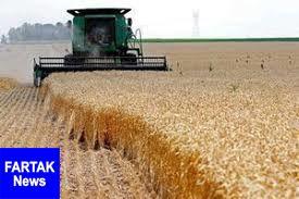 حداقل قیمت گندم سال زراعی جدید ۲۵۵۰ تومان است
