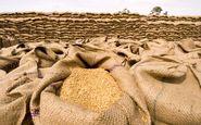 قیمت خرید تضمینی گندم تعیین شد