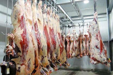 عرضه گوشت بره با قیمت تنظیم بازار آغاز شد