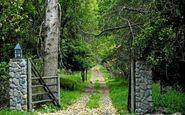 جنگل شروود ، جایی که در آن با رابین هود برخورد می کنید 