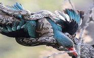 لحظه شکار پرنده توسط مار در رباط کریم