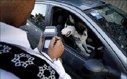 عواقب حقوقی نگهداری حیوانات + فیلم