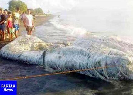 لاشه موجود عجیب در فیلیپین