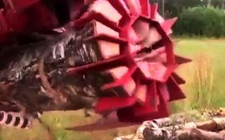 تبدیل کنده درخت به هیزم، در 3 ثانیه! + فیلم