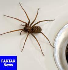 با عنکبوت های داخل خانه کاری نداشته باشید