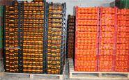 صادرات سیب و پرتقال آزاد شد