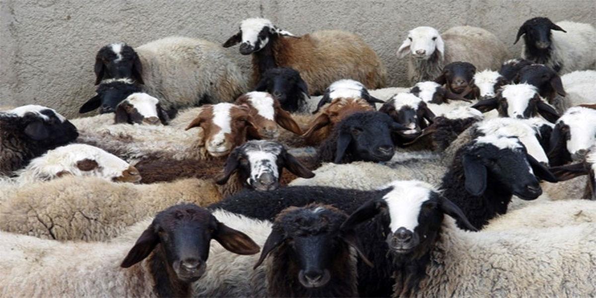نرخ گوسفند در عید قربان